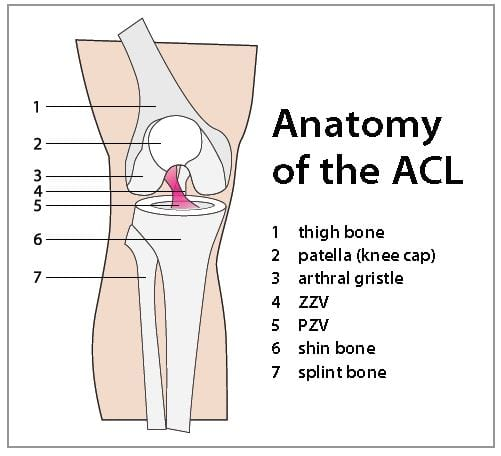 The Abcs Of Acls Sports Injuries Are Common In This Knee Ligament